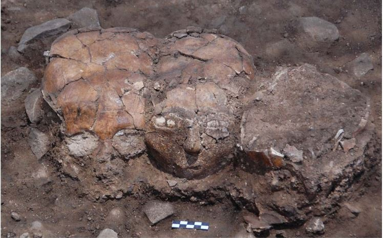 Neolithic plastered skulls with shell pieces used as eyes,  in situ . From the paper 'The Plastered Skulls and Other PPNB Finds from Yiftahel, Lower Galilee (Israel)' by Milevski  et al.  (2014), published in  Plos One.
