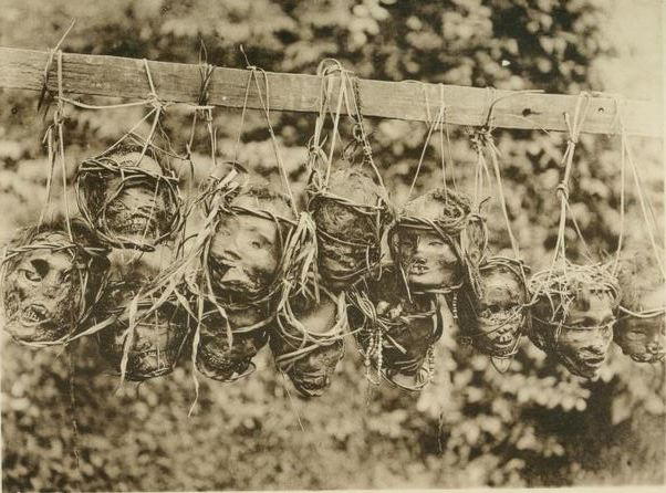 Heads taken by the Iban people of Borneo. From  The pagan tribes of Borneo  (1912) by Charles Hose