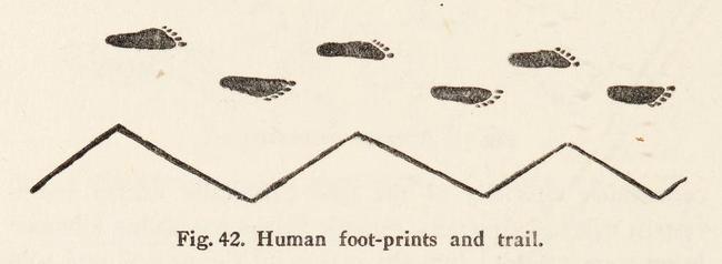 From  The Australian Aboriginal  (1925) by Herbert Basedow