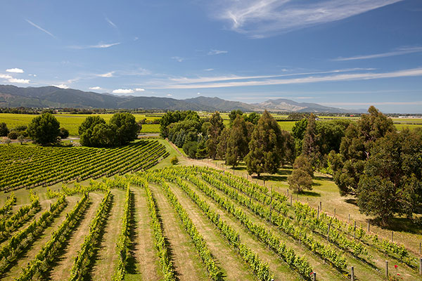 Matakana - Boutique wines & one of New Zealand's most diverse range of varieties on offer.