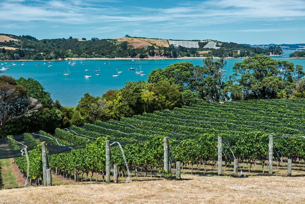 Waiheke Island - New Zealand's 'island of wine', artisan wines and boutique experiences