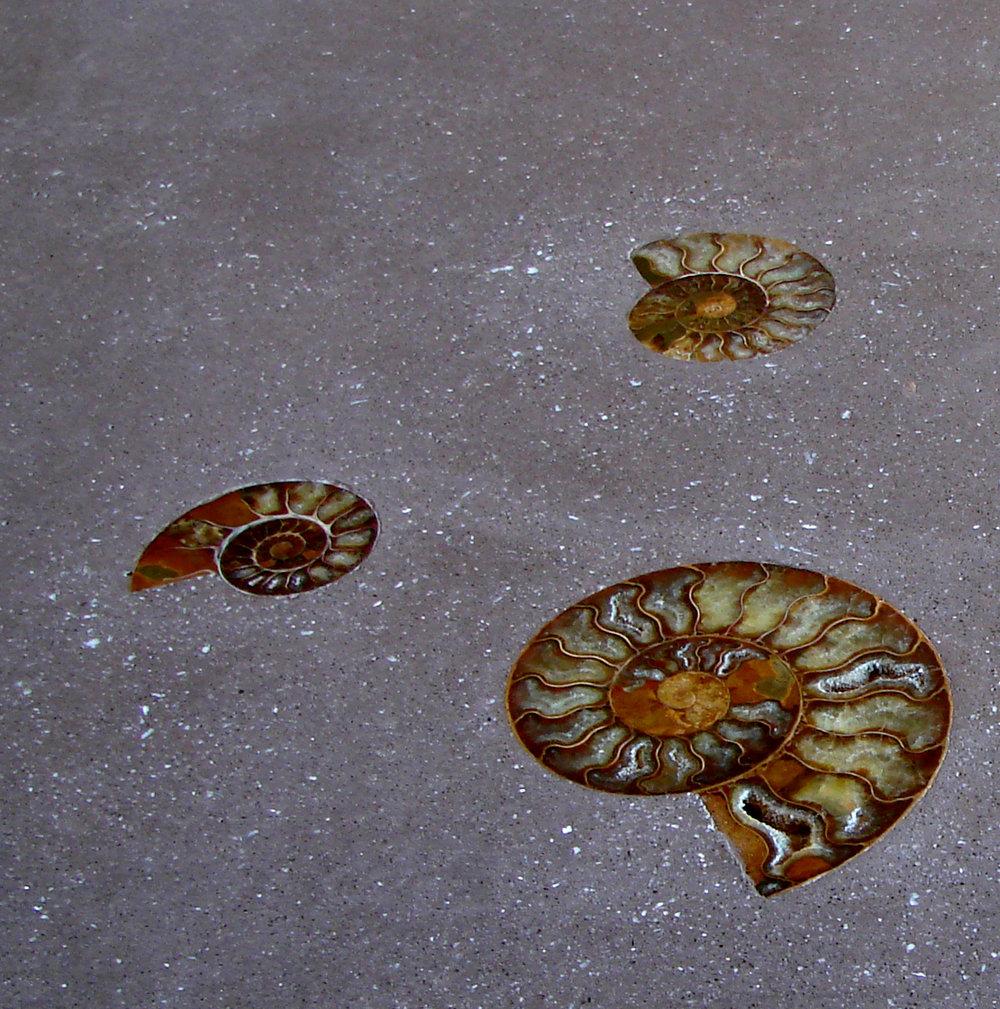 fossiltrio.jpg