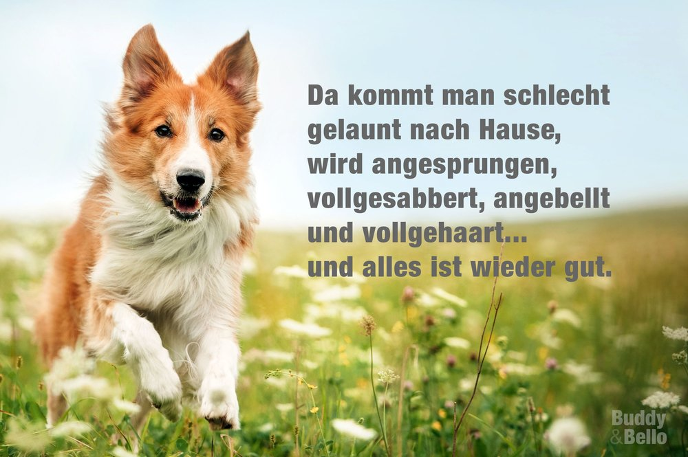 Buddyandbello.com Hundequote gute Laune