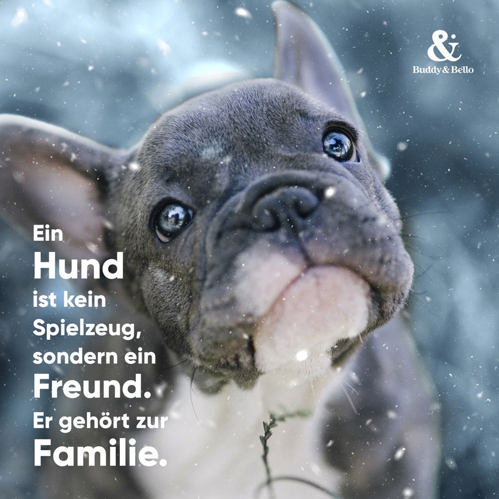 Hundkeinspielzeug.png