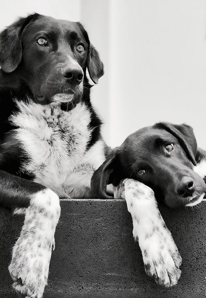 Lennox & Beetle - Beide Hunde von Petra stammen aus dem Tierschutz und sind ein tolles Team