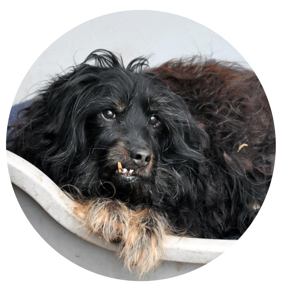 Hundesenioren - Jeder Hund hat andere Futter-Bedürfnisse, vor allem, wenn der Biss nicht mehr stimmt