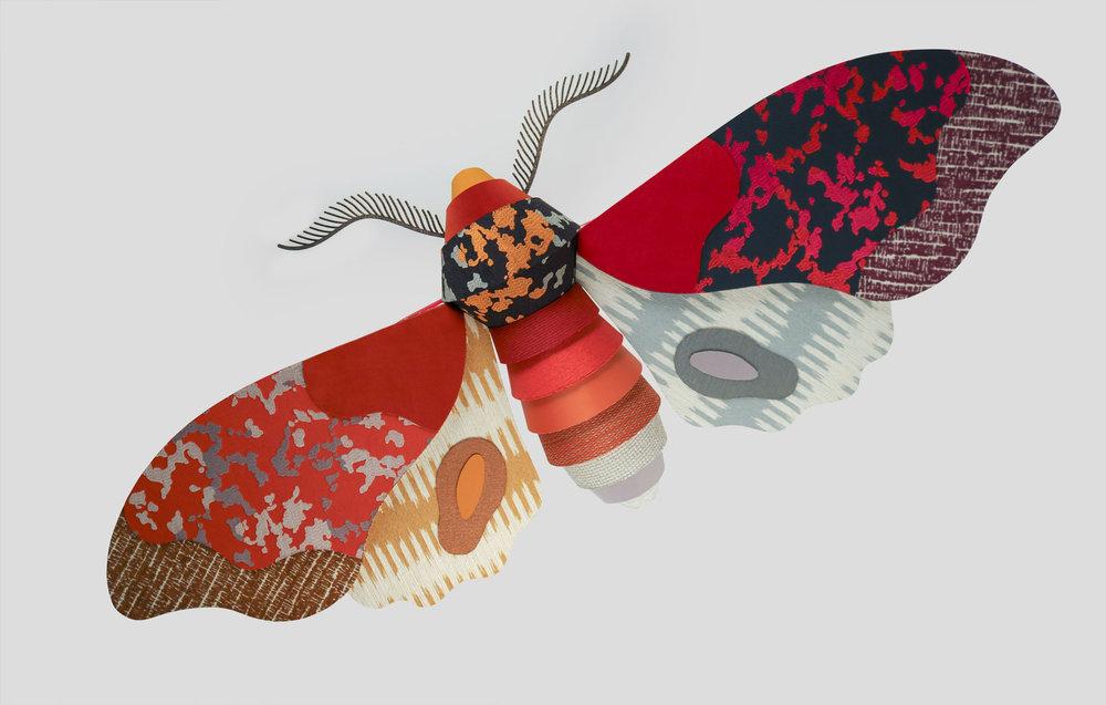 heavyeyes_knoll_moth.jpg