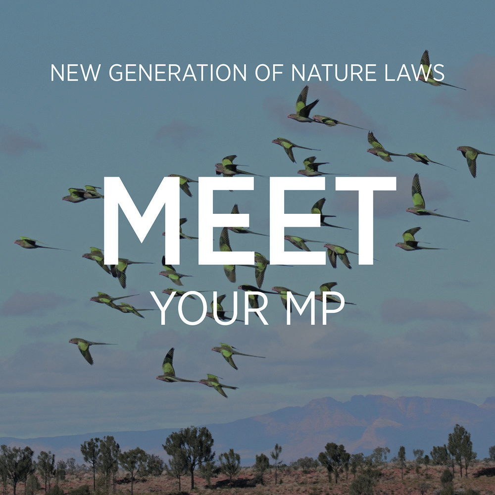 Showing your politicians that you care about birds and want new, stronger nature laws is a huge part of this campaign! This can be a formal meeting or a field trip, led by a single local expert or a whole community group.