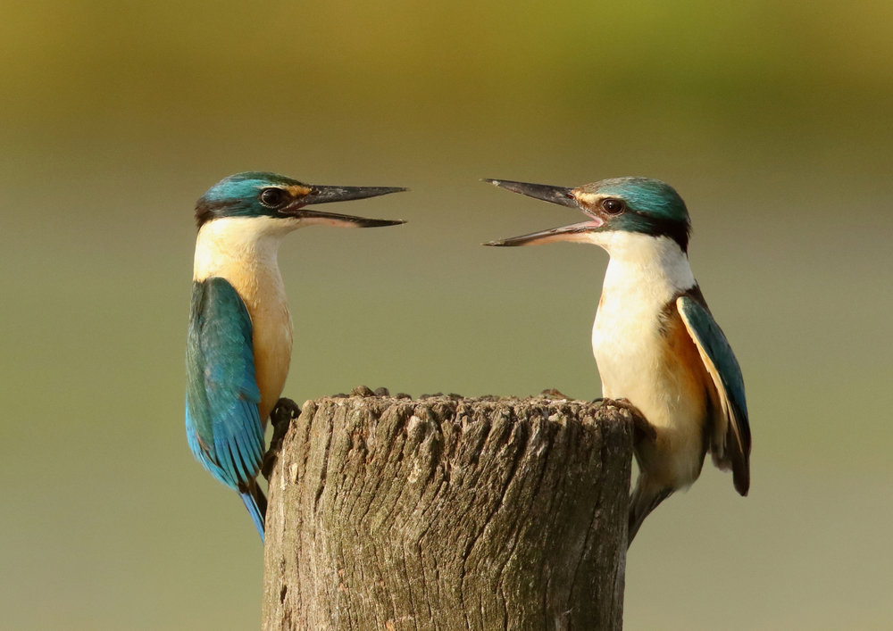 5. kingfisher discussion by john dalton.jpg