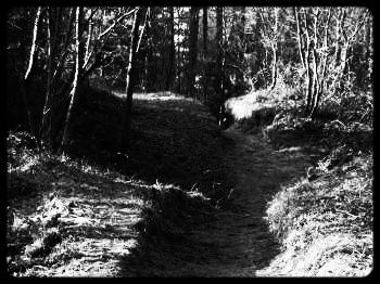 Pine Barrens.jpg