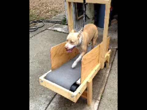 manual-dog-treadmill.jpg