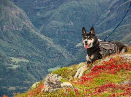 dog-hiking.jpeg
