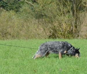 dog-tracking.jpg