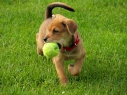 dog-playing-fetch.jpg