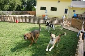 dog-daycare.jpeg