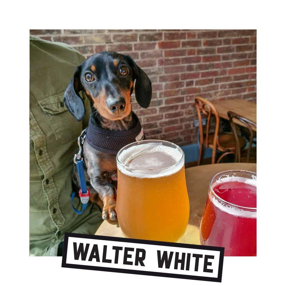 Walter White.jpg