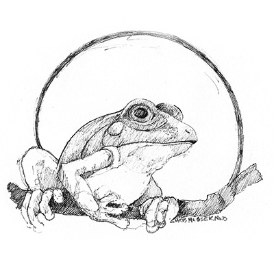 sketches_0002_frog.jpg