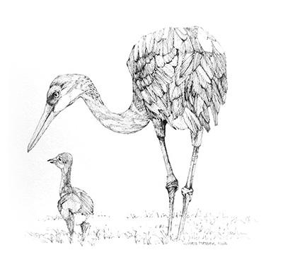 sketches_0005_cranes.jpg