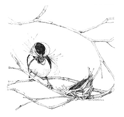 sketches_0000_nest_building.jpg