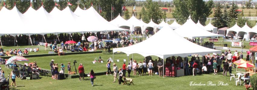 summer show 2011.jpg