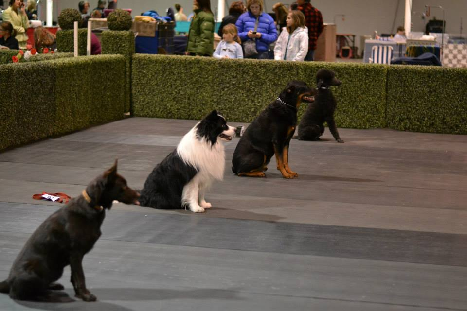 AKC 2014 Obedience1.jpg