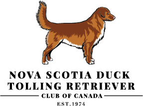 NS Duck Tolling Retriever.png