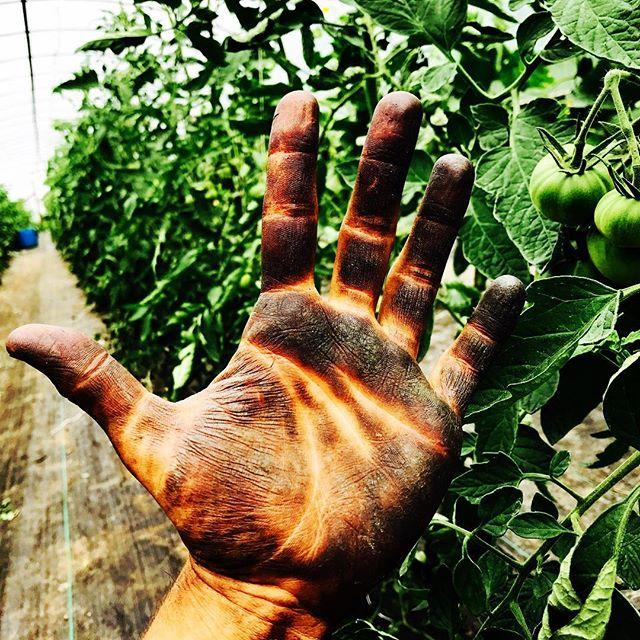 #tomatohands