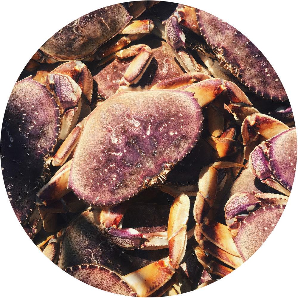 CrabsCircle.jpg