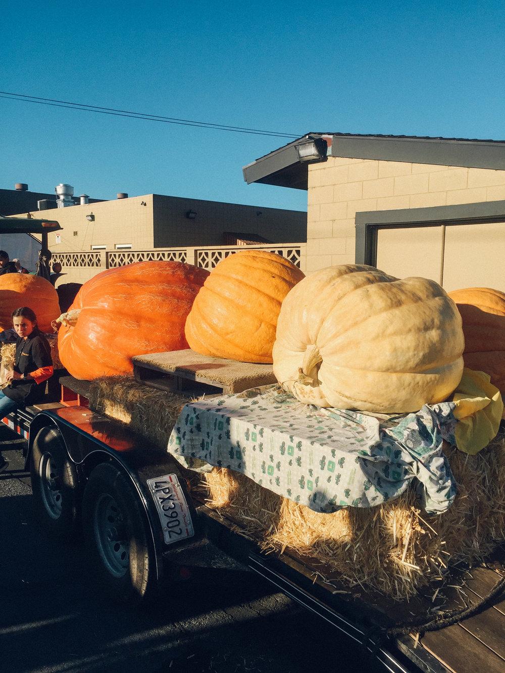 PumpkinFest-1.jpg