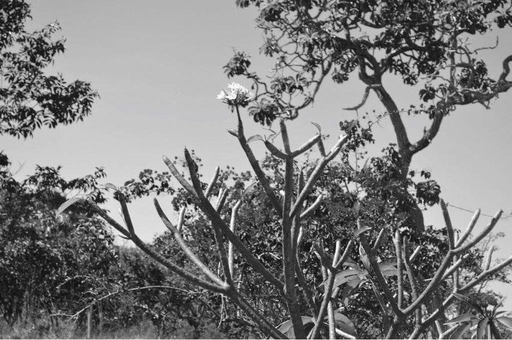 Cerrado, Pirinopolis, Brazil 2006