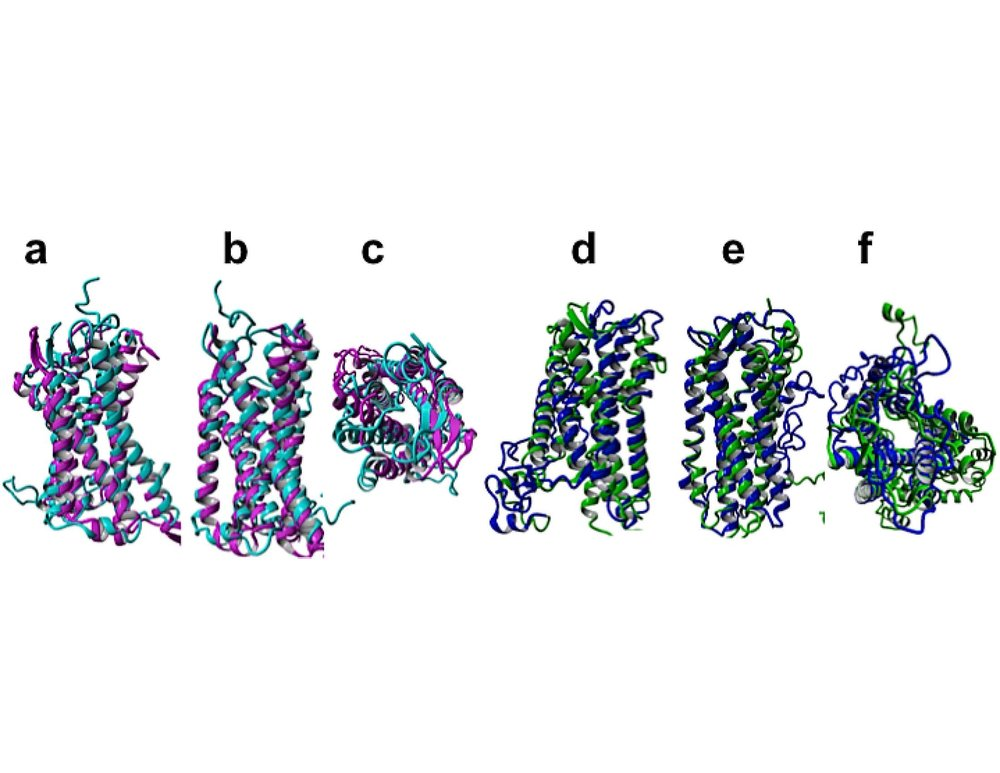 Structural comparison of designed water-soluble GPCRs and native GPCRs, superimposed, distinguished by color.