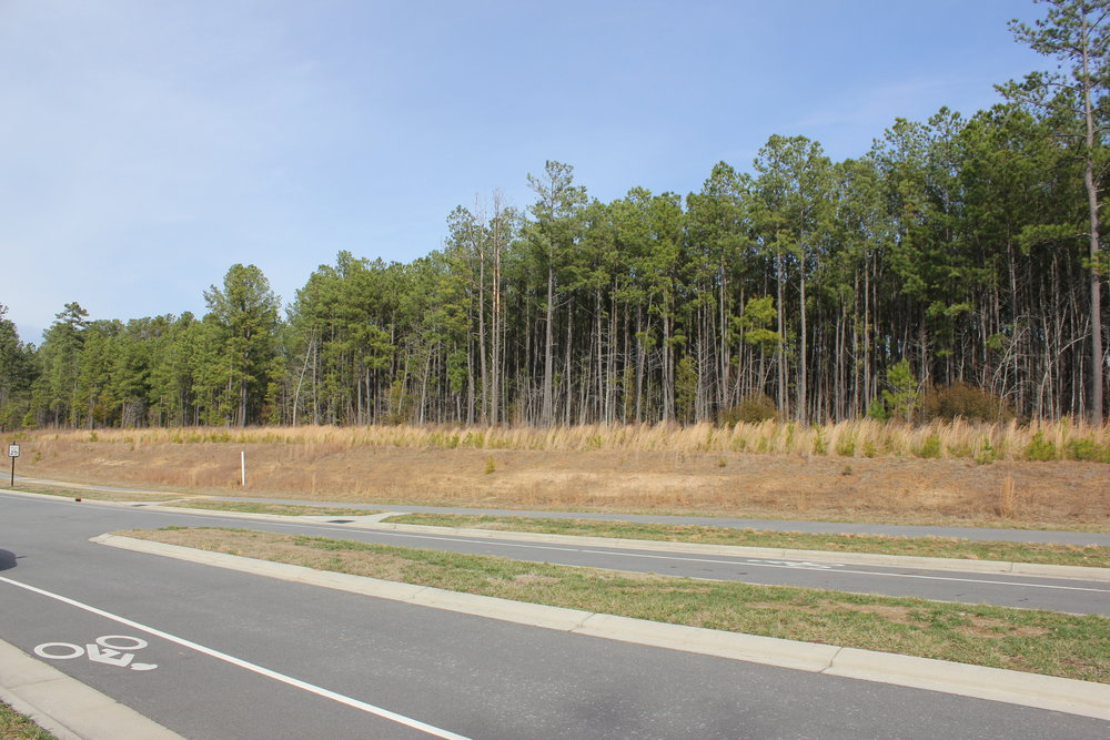 Cameron Pond Future Park Site.JPG