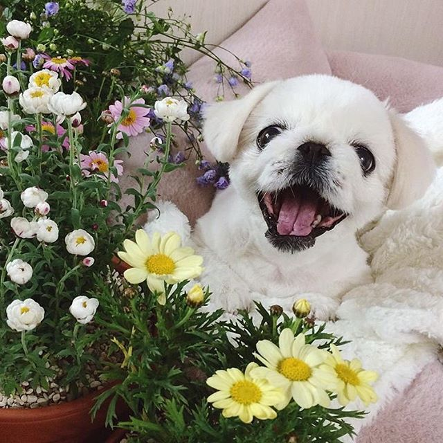 #Tfw IT'S A WARM SPRING FRIDAY BAYBEEEEE!🌼🌱💜