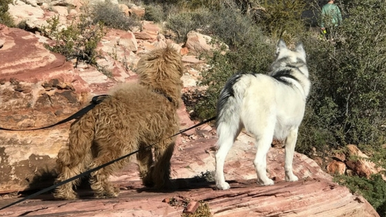 Fun Hiking at Red Rock Canyon/Calico Basin with our Dogs - Outdoor activities in Las Vegas
