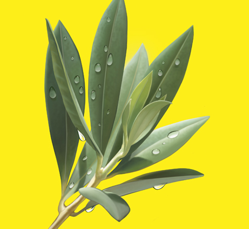 hyper real olive leaf