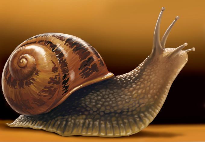 realism snail