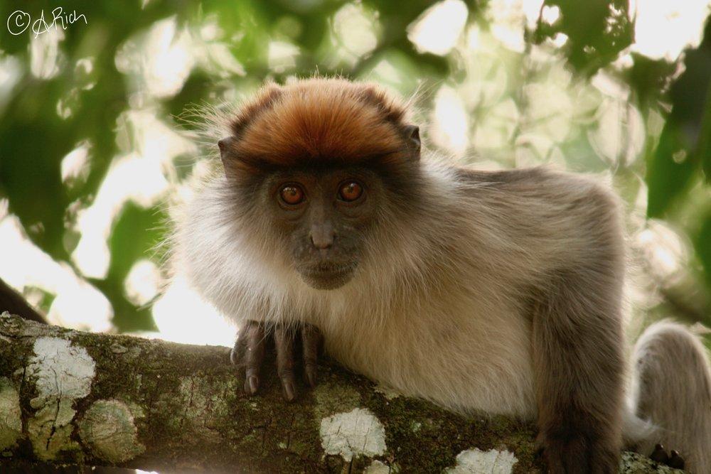 Kibale National Park, Uganda -