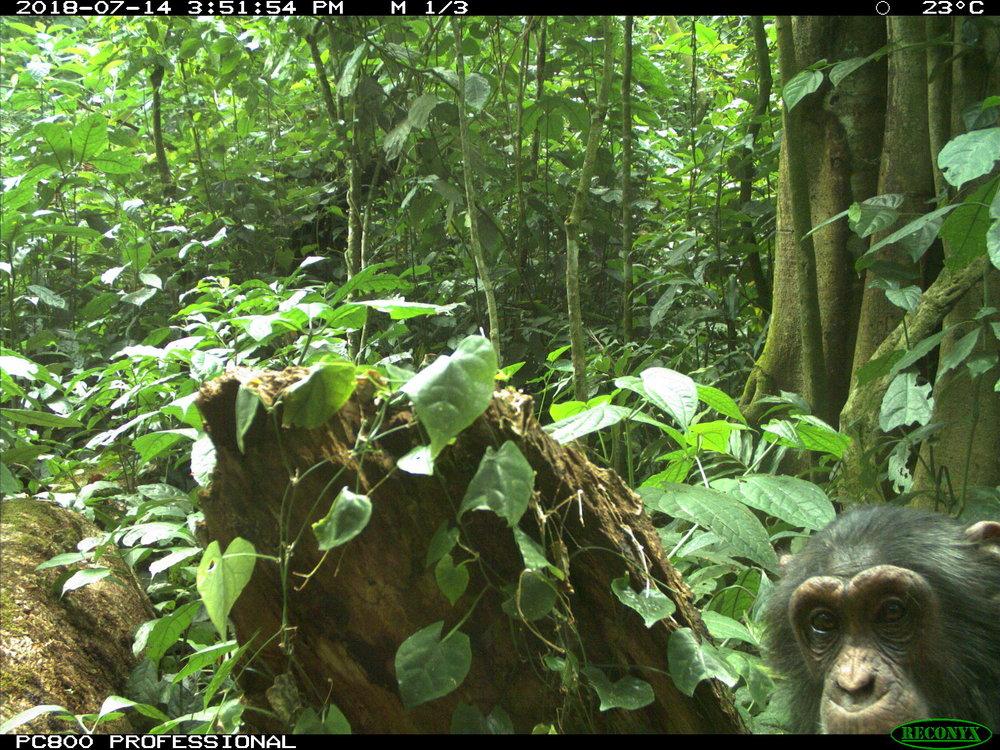 Itwara Forest Reserve,Uganda -