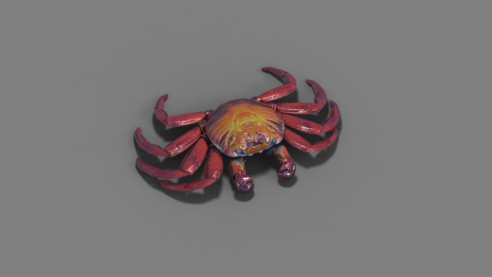 Modélisation d'un crabe rouge