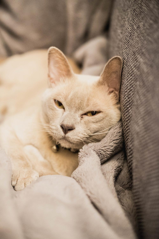 my-cat3.jpg
