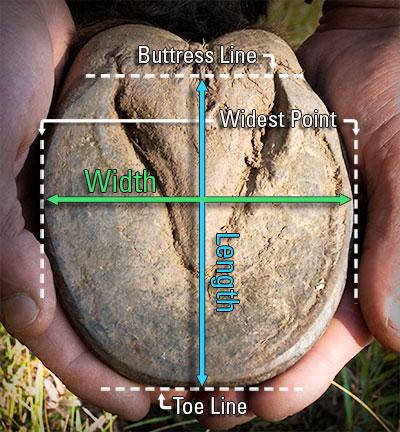 easyboot hoof measuring guide.jpg