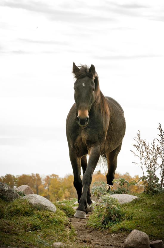 Look what is possible with barefoot horses! My horses run on the granite slabs on my property. Freedom, comfort and sound horses are beautiful to behold.