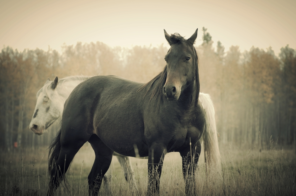 WHY BAREFOOT? - Some tips to help you transition your horse...