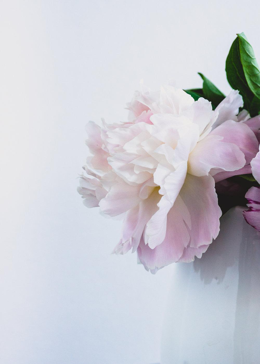 Julie Powell_Peonies Dashboard.jpg