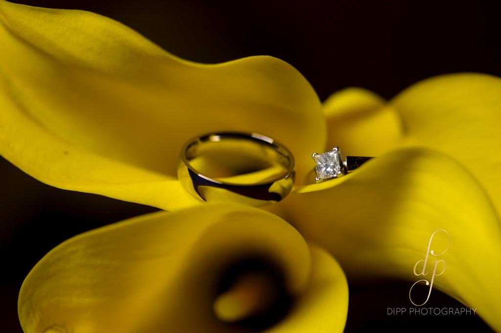 Dipp Photography-0518