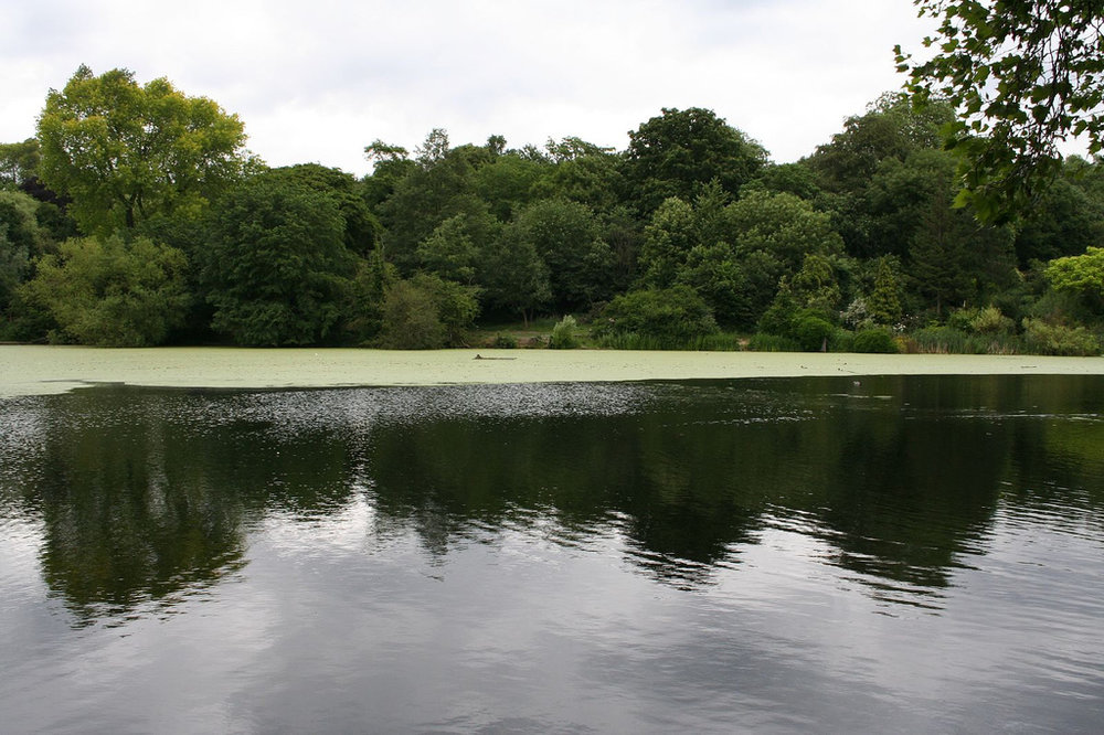 By eisenbergalex - Hampstead Ponds, CC BY 2.0, https://commons.wikimedia.org/w/index.php?curid=3155557
