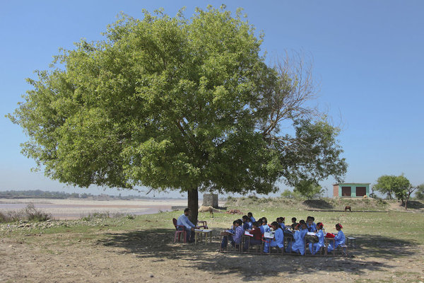 Indian school children tree at school.jpeg