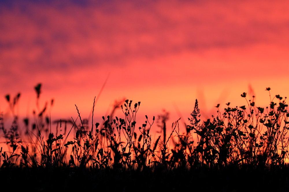 Tiree machair on a late summer evening.