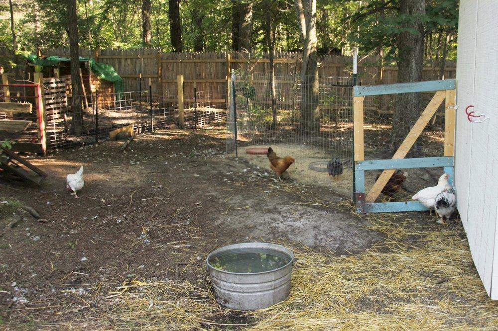 Small House Farm 2016  (50).JPG