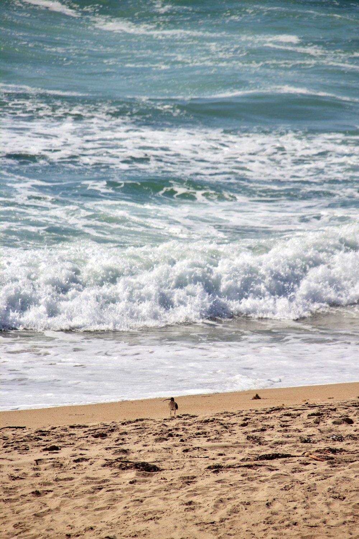 Katzman Beach Day 033.JPG